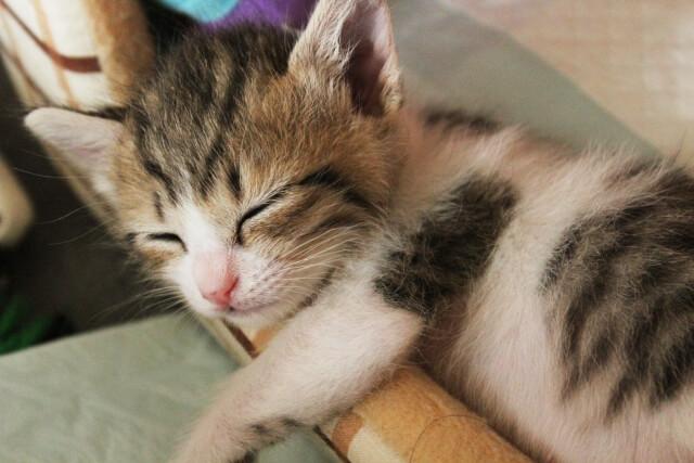 セコムを契約すると安心して眠れるようになった
